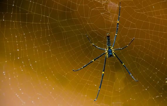 Örümcek Öldürmek Günah Mıdır?